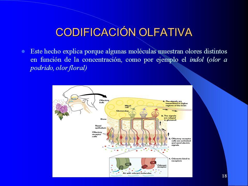 CODIFICACIÓN OLFATIVA