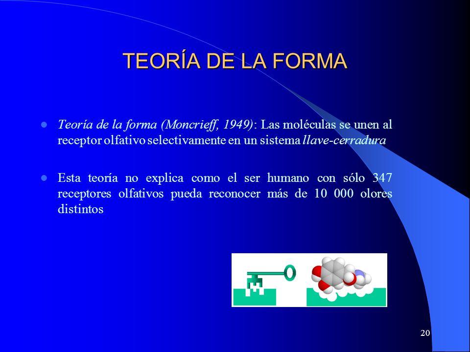 TEORÍA DE LA FORMA Teoría de la forma (Moncrieff, 1949): Las moléculas se unen al receptor olfativo selectivamente en un sistema llave-cerradura.