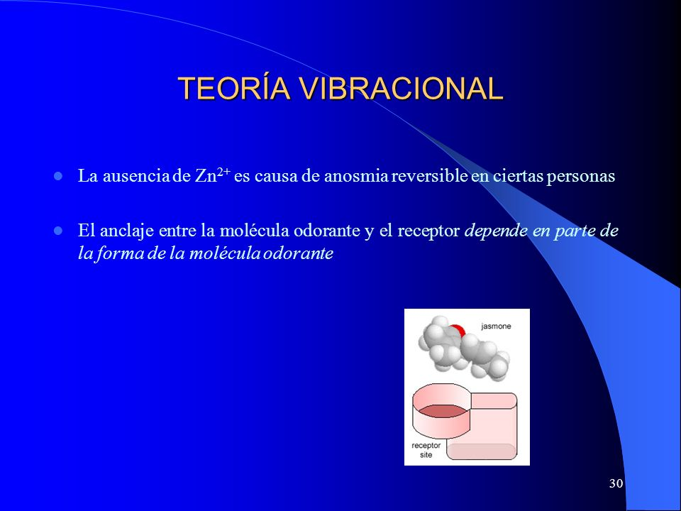 TEORÍA VIBRACIONAL La ausencia de Zn2+ es causa de anosmia reversible en ciertas personas.