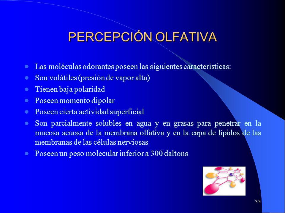 PERCEPCIÓN OLFATIVA Las moléculas odorantes poseen las siguientes características: Son volátiles (presión de vapor alta)