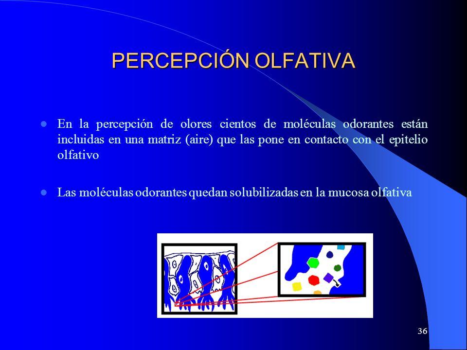 PERCEPCIÓN OLFATIVA