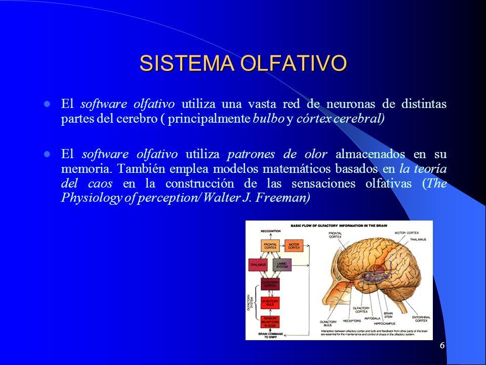 SISTEMA OLFATIVO El software olfativo utiliza una vasta red de neuronas de distintas partes del cerebro ( principalmente bulbo y córtex cerebral)