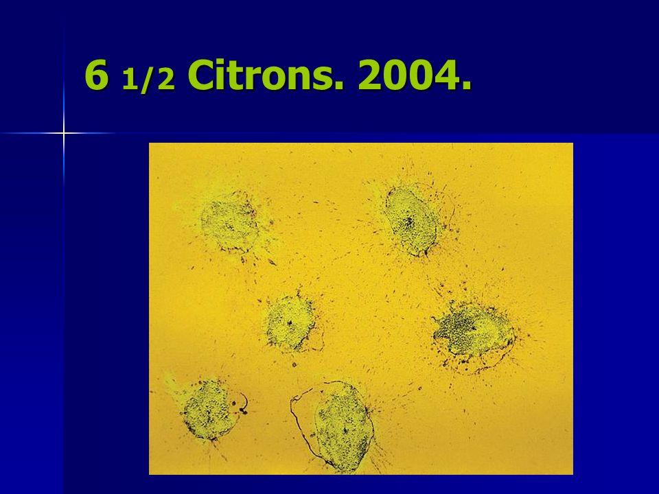 6 1/2 Citrons. 2004.
