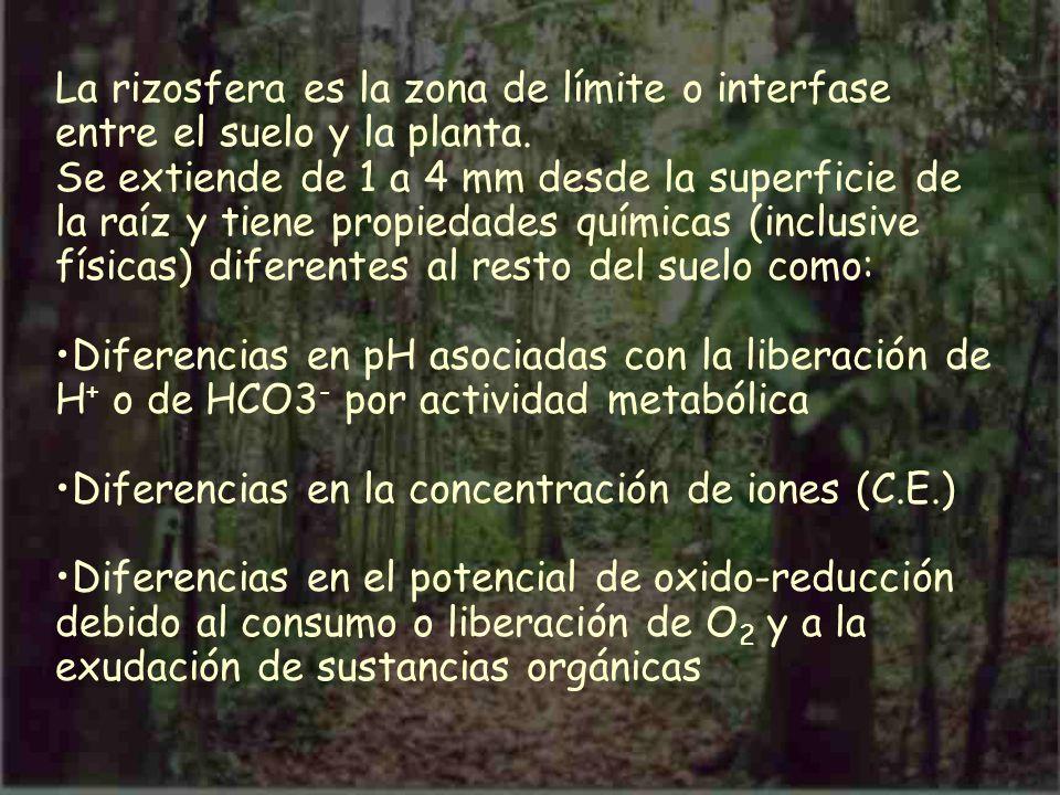 La rizosfera es la zona de límite o interfase entre el suelo y la planta.