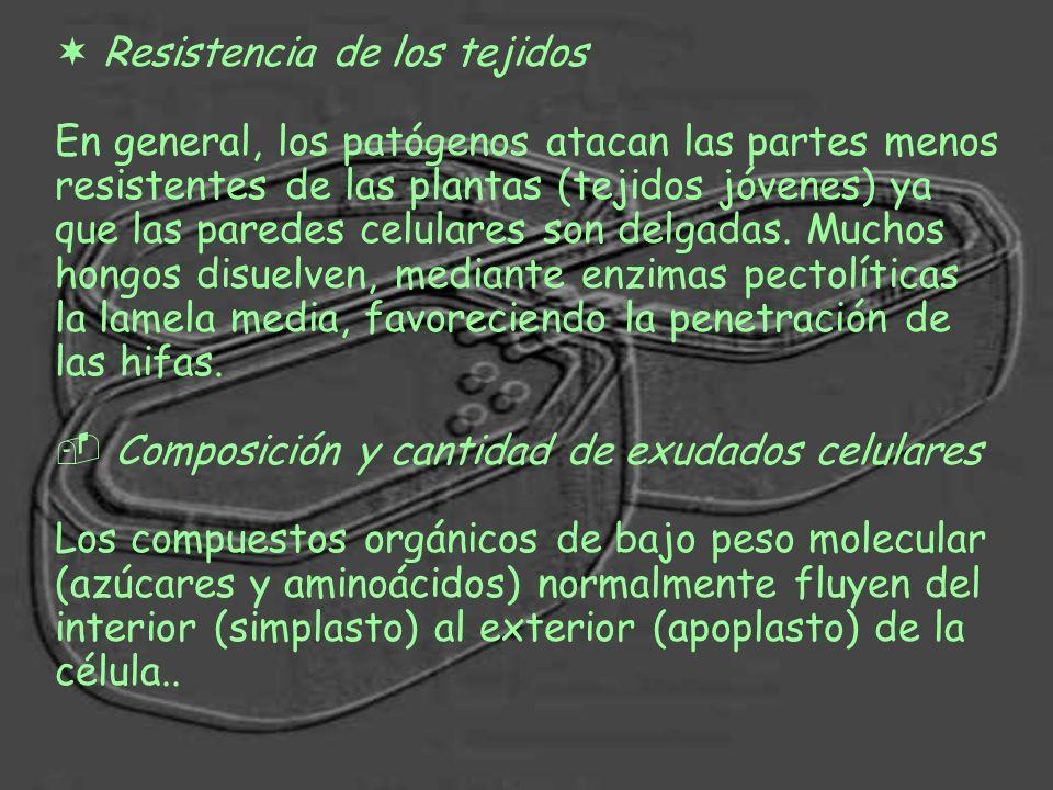 Resistencia de los tejidos