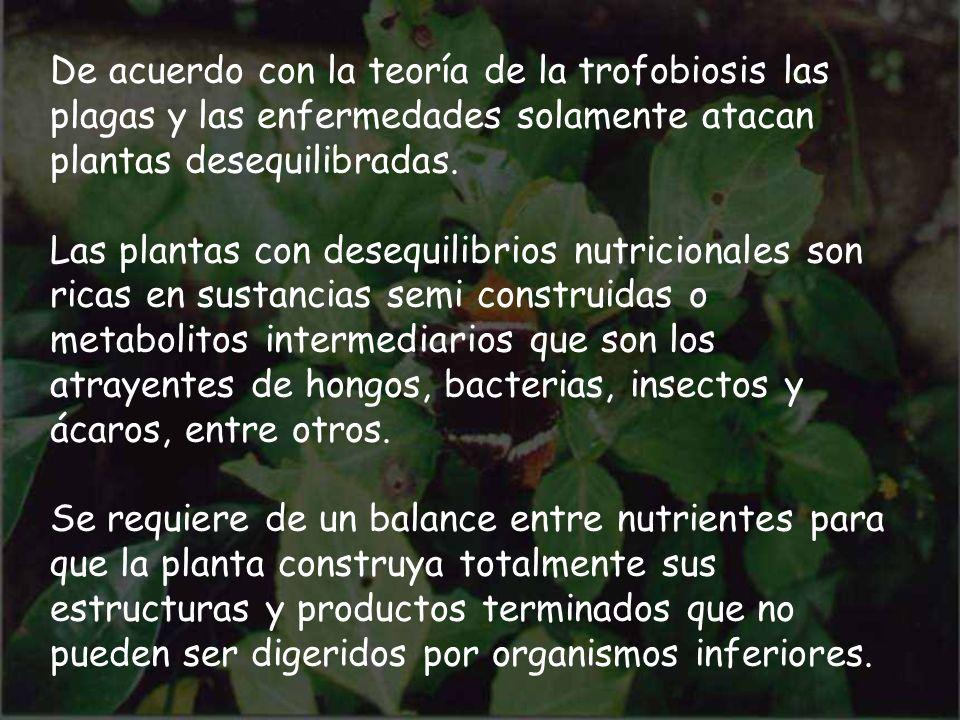 De acuerdo con la teoría de la trofobiosis las plagas y las enfermedades solamente atacan plantas desequilibradas.