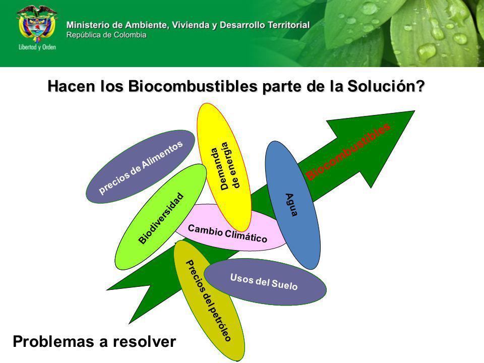 Pérdida de Biodiversidad