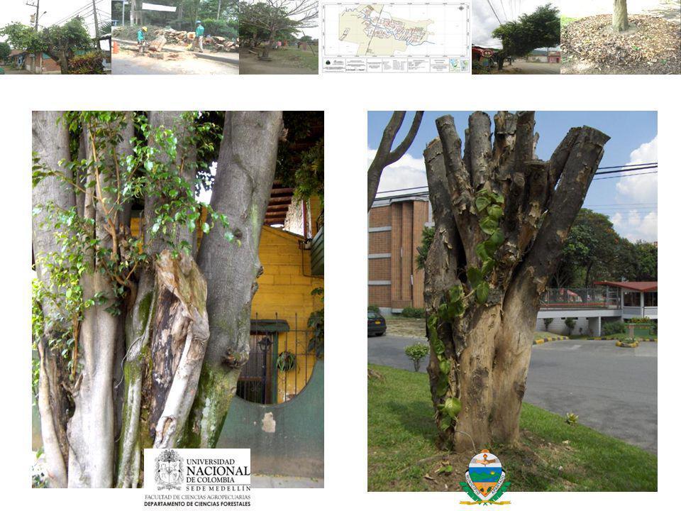 Muerte de los árboles por TOPPING