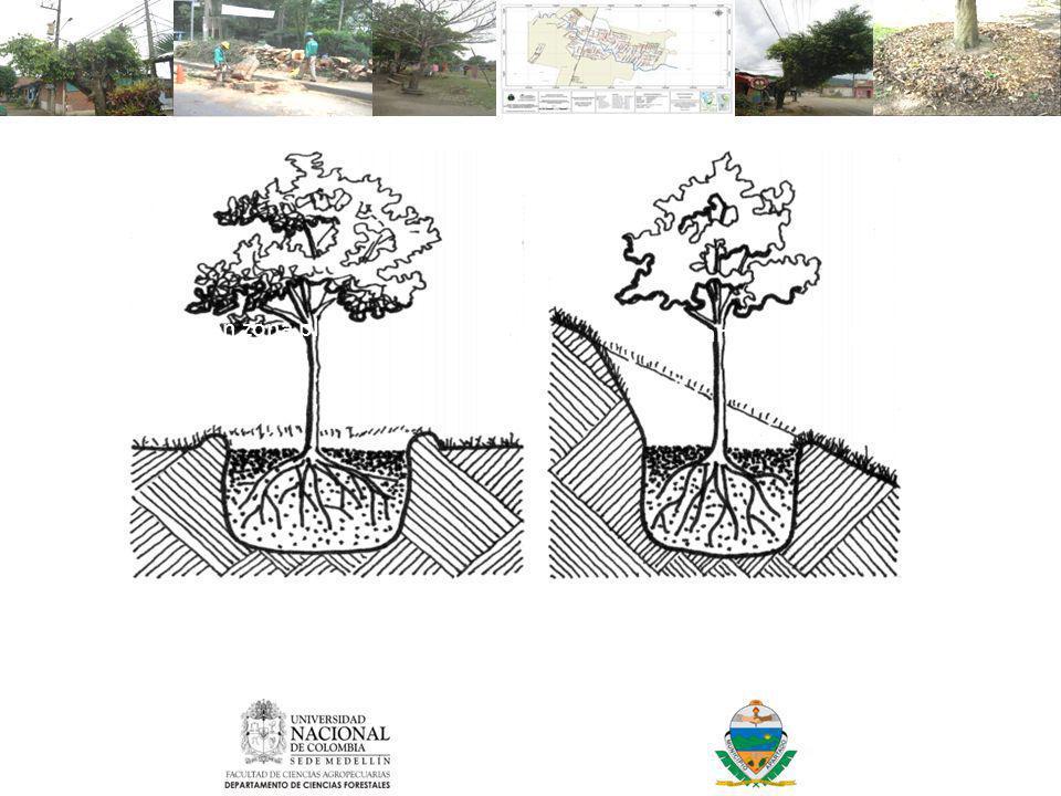 Plantación en zona plana