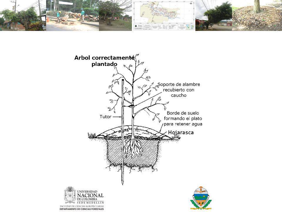 Adecuación completa del sitio de plantación