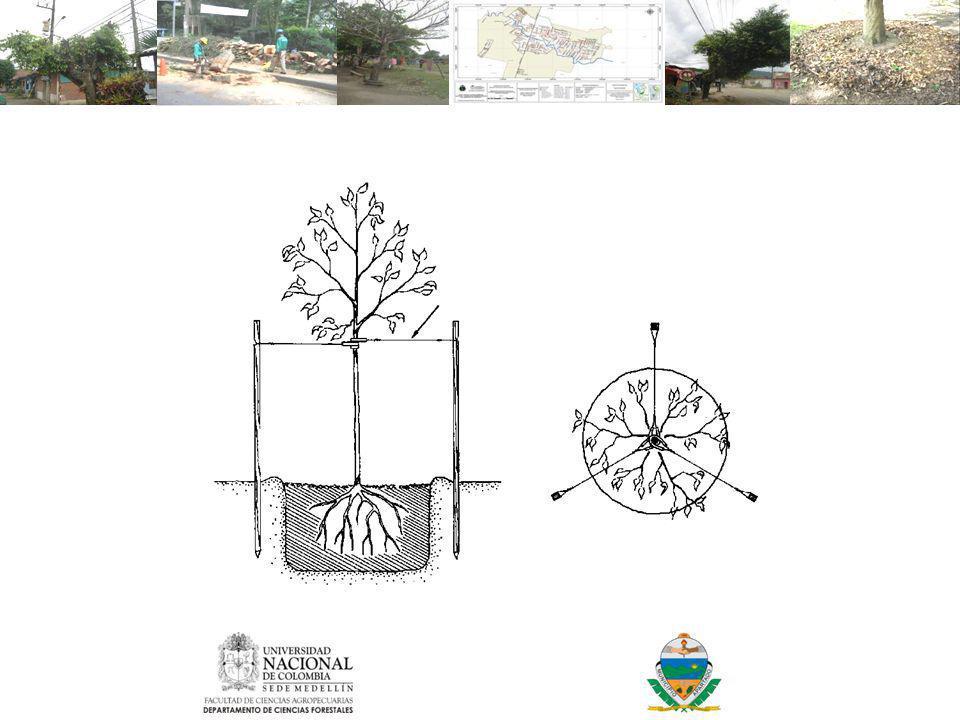 Tutorado en árboles recién plantados