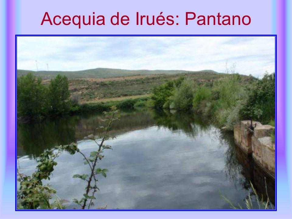 Acequia de Irués: Pantano
