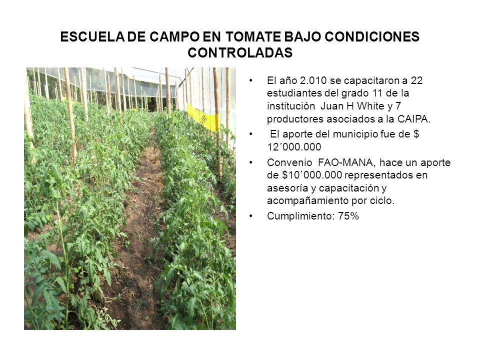ESCUELA DE CAMPO EN TOMATE BAJO CONDICIONES CONTROLADAS