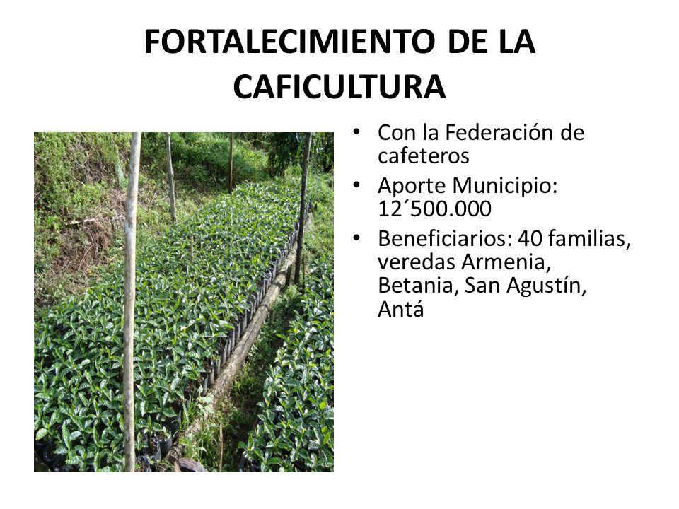 FORTALECIMIENTO DE LA CAFICULTURA