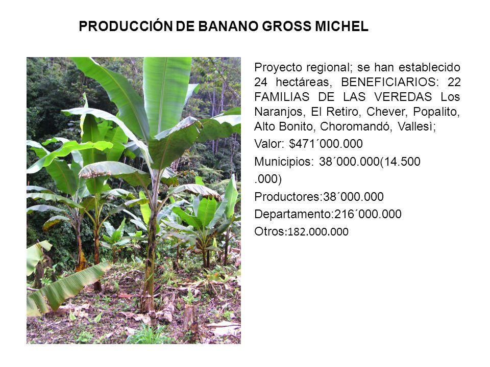 PRODUCCIÓN DE BANANO GROSS MICHEL