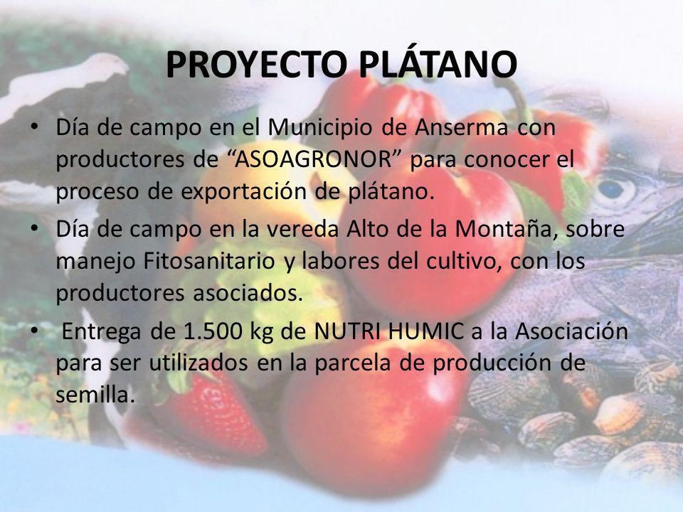 PROYECTO PLÁTANO Día de campo en el Municipio de Anserma con productores de ASOAGRONOR para conocer el proceso de exportación de plátano.