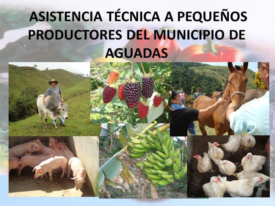 ASISTENCIA TÉCNICA A PEQUEÑOS PRODUCTORES DEL MUNICIPIO DE AGUADAS