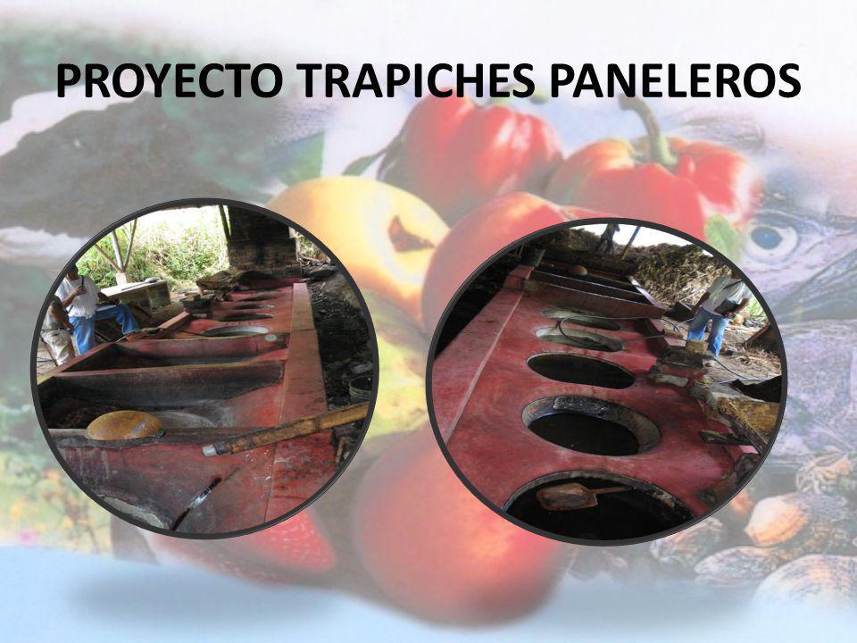 PROYECTO TRAPICHES PANELEROS