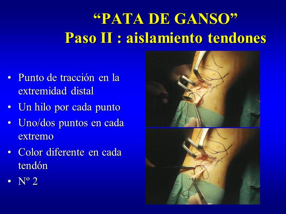 PATA DE GANSO Paso II : aislamiento tendones