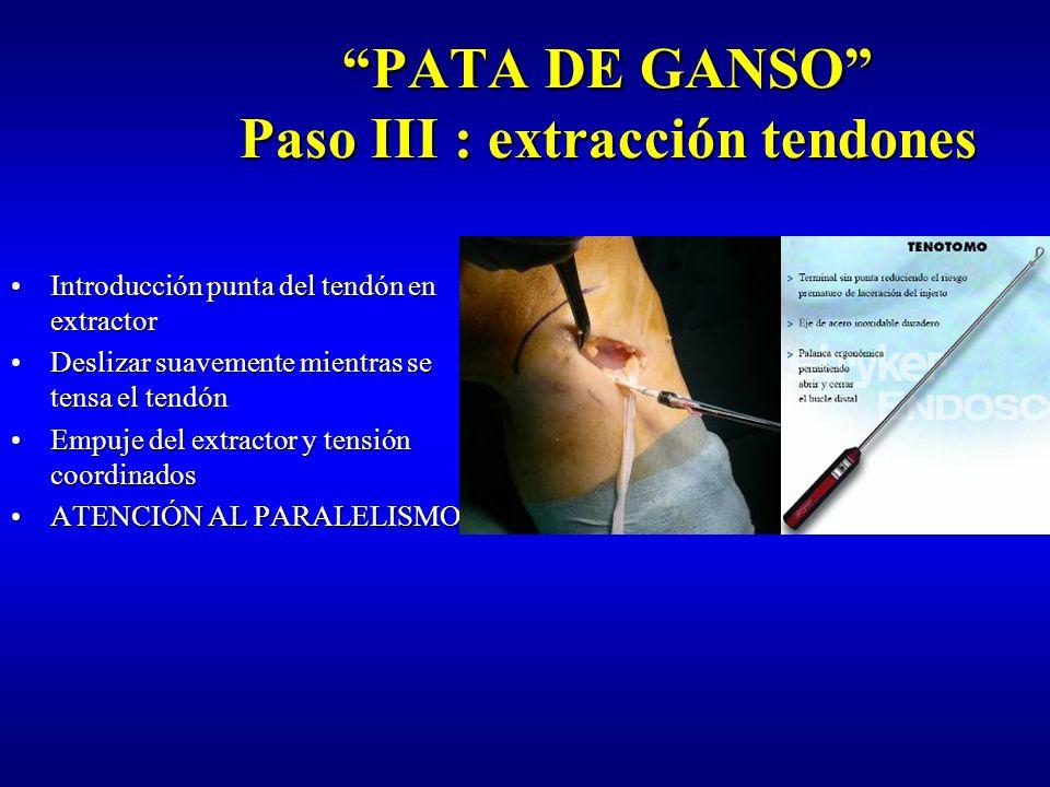 PATA DE GANSO Paso III : extracción tendones