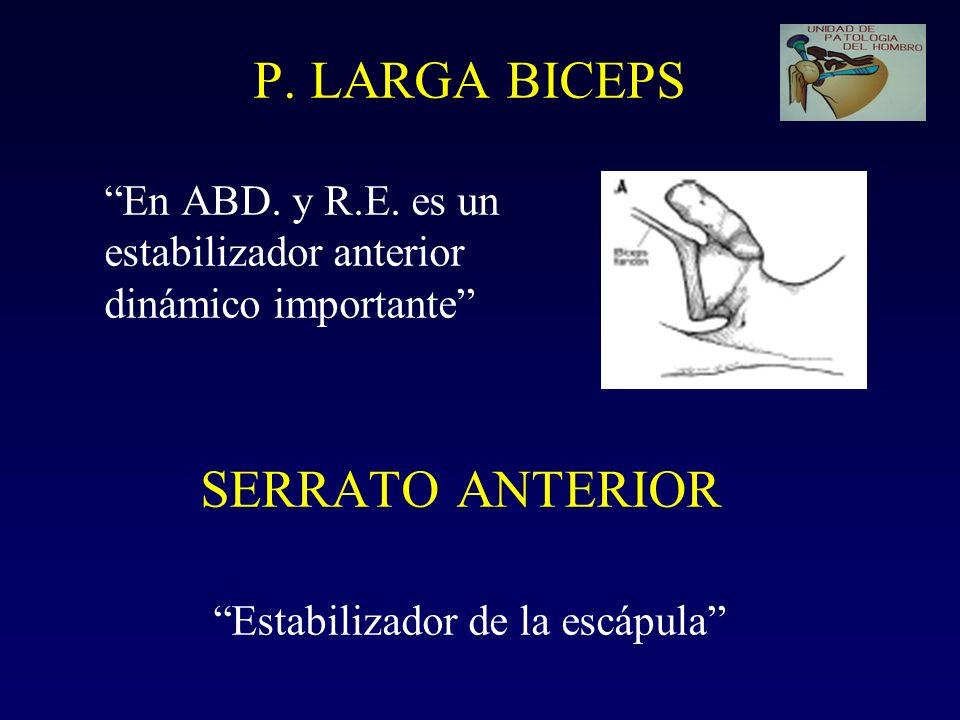 P. LARGA BICEPS En ABD. y R. E