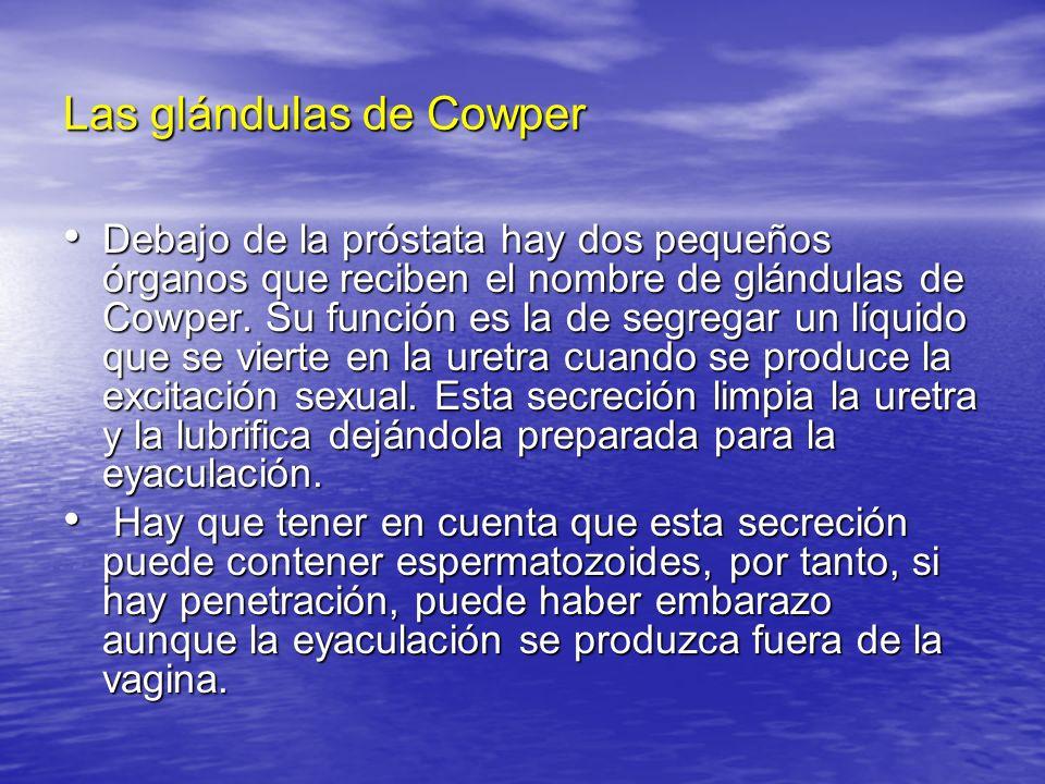 Las glándulas de Cowper