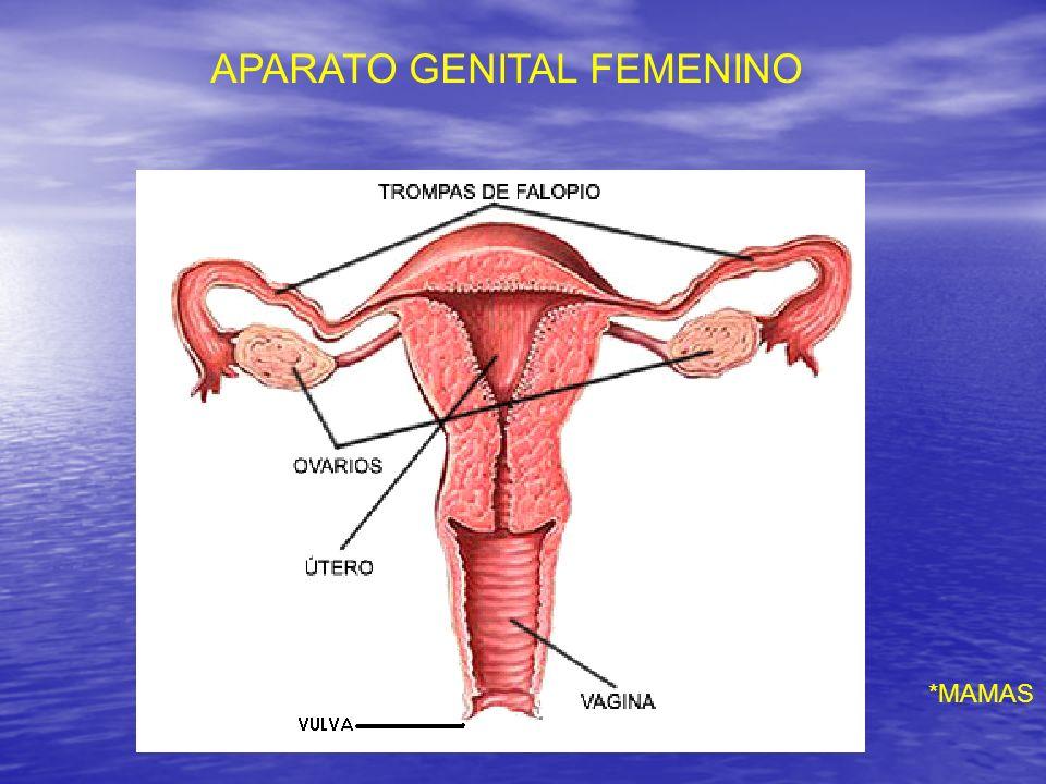 APARATO GENITAL FEMENINO
