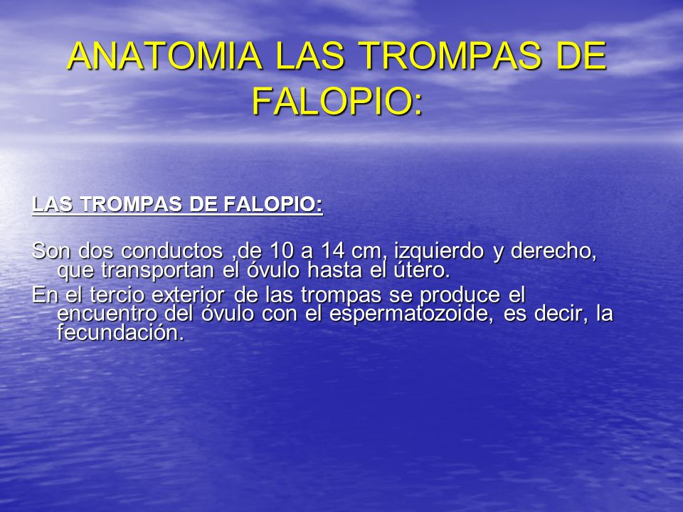 ANATOMIA LAS TROMPAS DE FALOPIO: