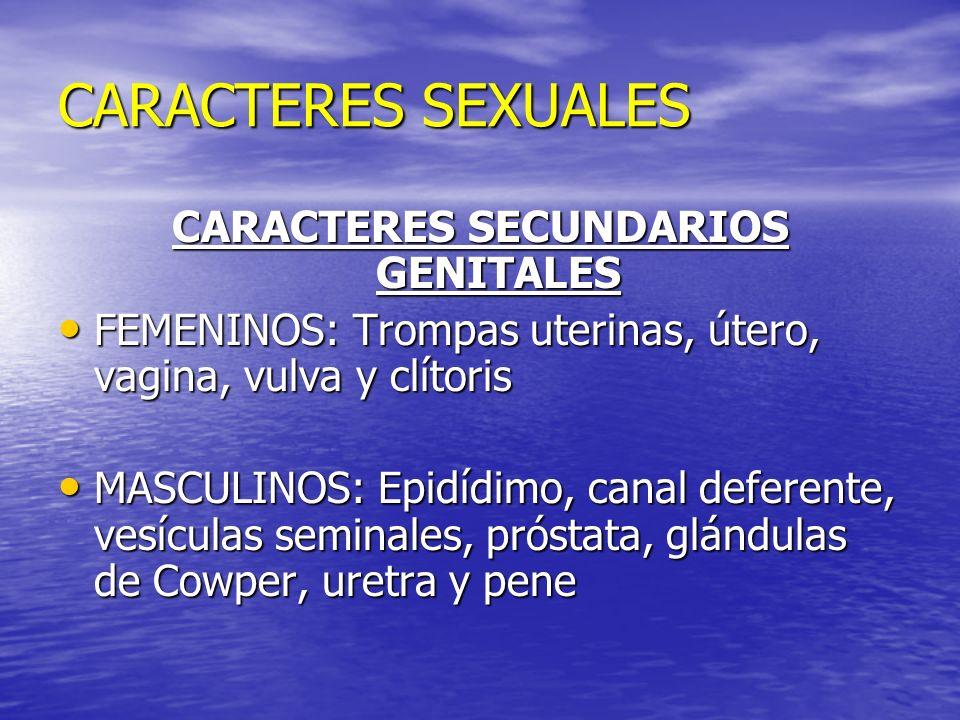 CARACTERES SECUNDARIOS GENITALES