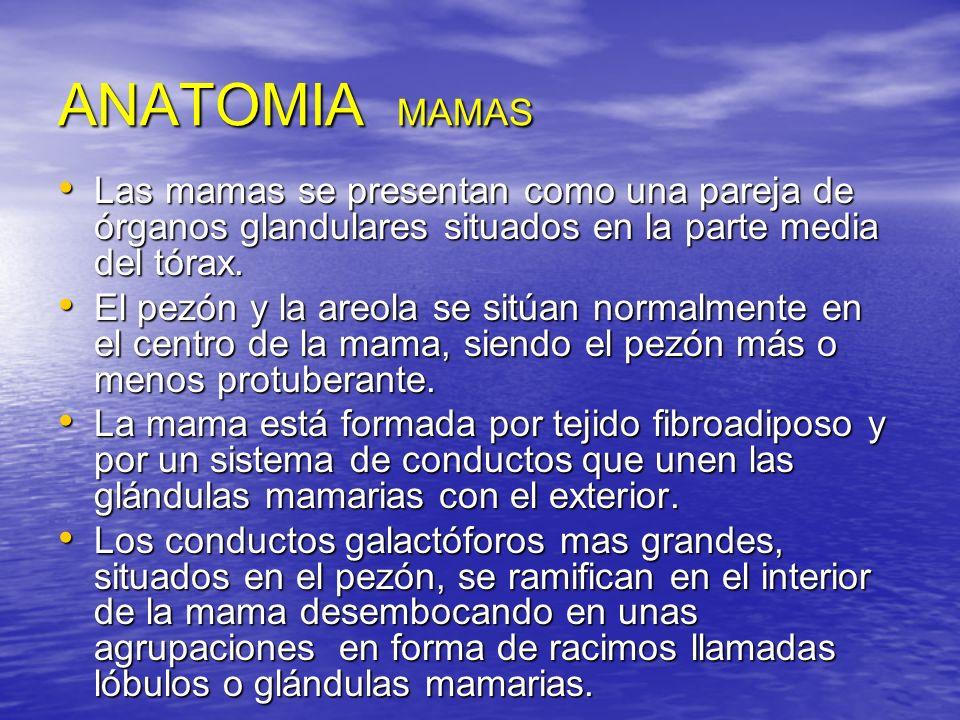 ANATOMIA MAMAS Las mamas se presentan como una pareja de órganos glandulares situados en la parte media del tórax.