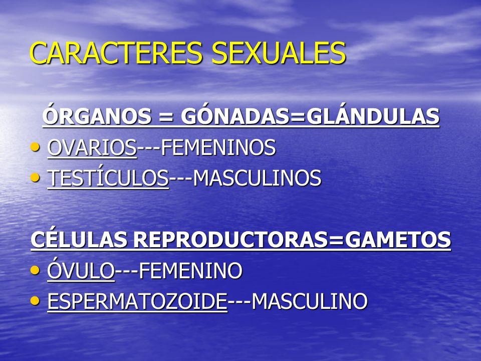 ÓRGANOS = GÓNADAS=GLÁNDULAS CÉLULAS REPRODUCTORAS=GAMETOS