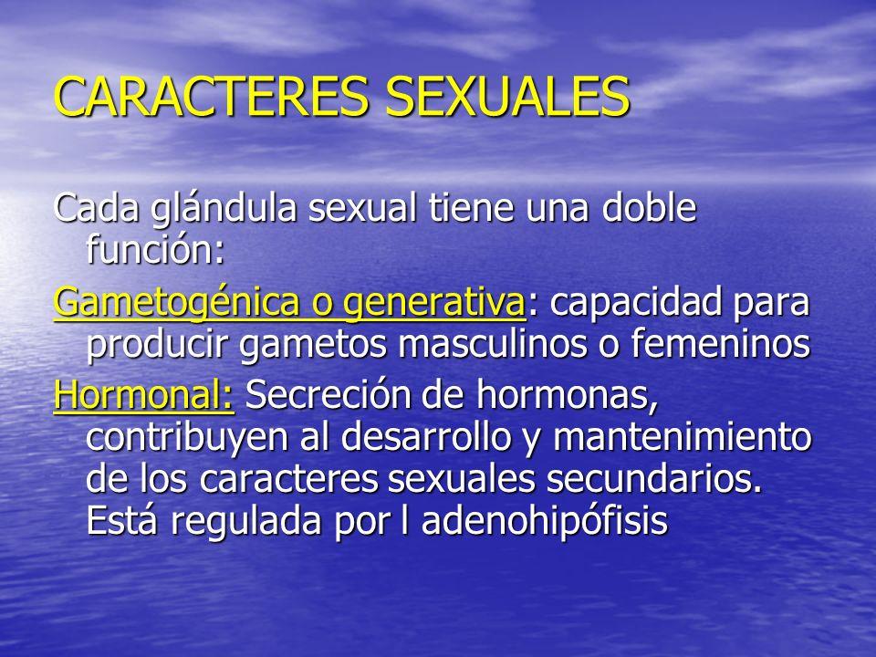 CARACTERES SEXUALES Cada glándula sexual tiene una doble función: