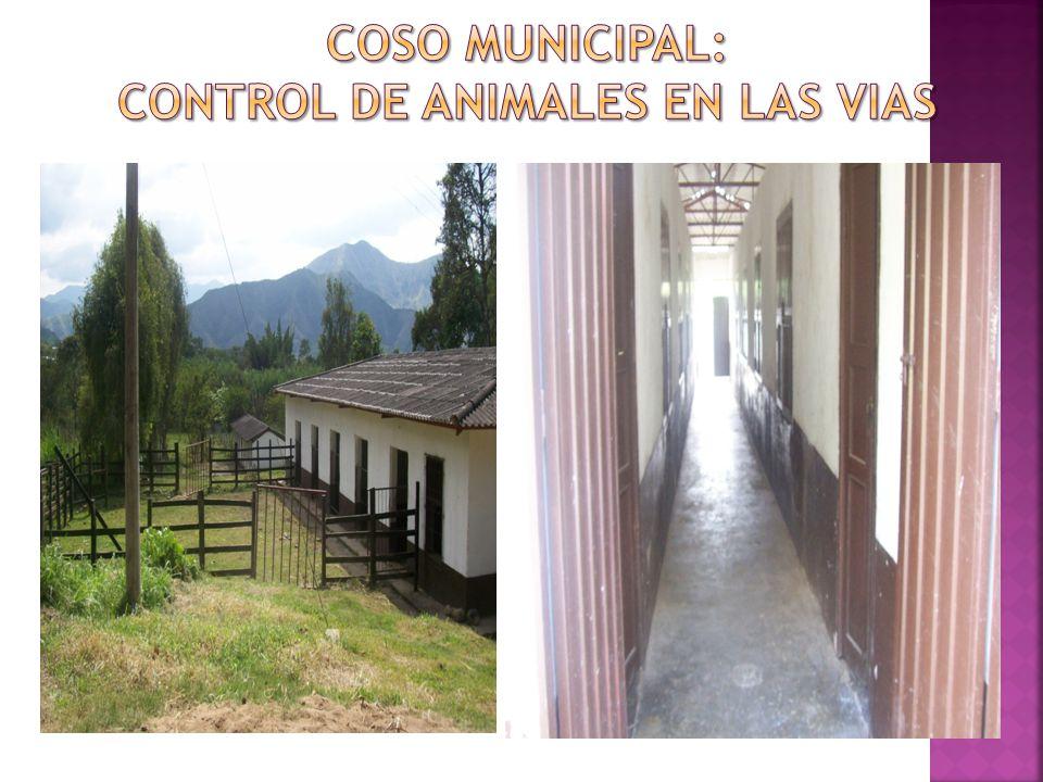 COSO MUNICIPAL: CONTROL DE ANIMALES EN LAS VIAS