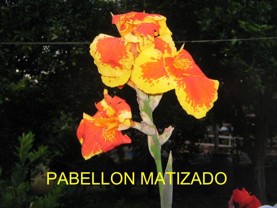 PABELLON MATIZADO