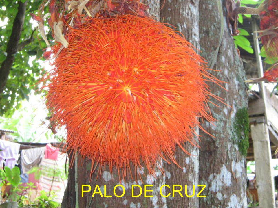 PALO DE CRUZ