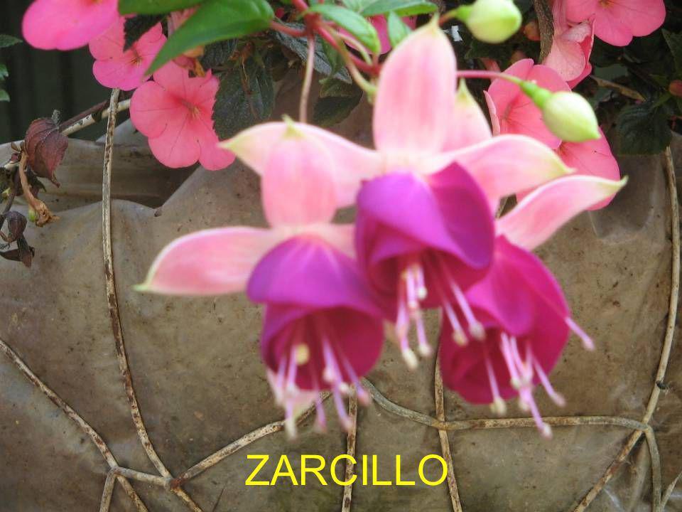 ZARCILLO