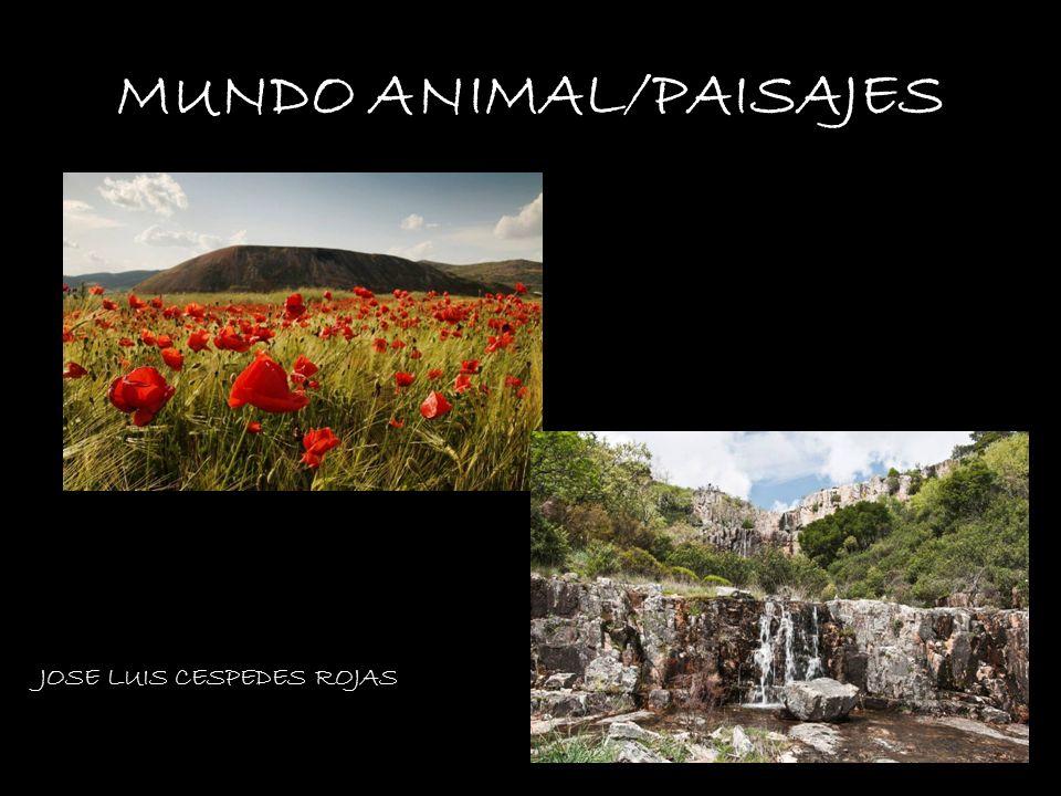 MUNDO ANIMAL/PAISAJES
