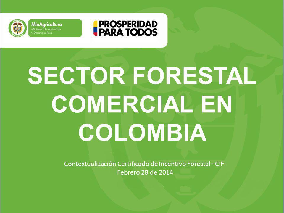 SECTOR FORESTAL COMERCIAL EN COLOMBIA