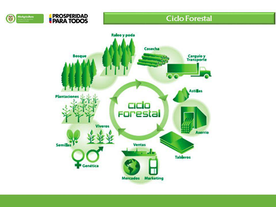 Ciclo Forestal