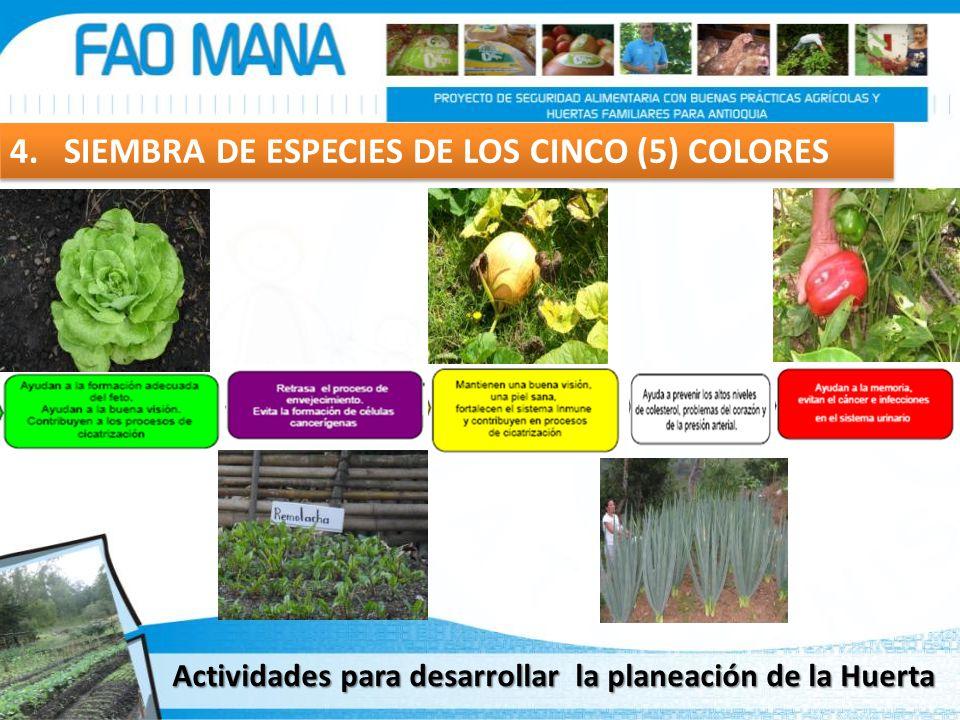 4. SIEMBRA DE ESPECIES DE LOS CINCO (5) COLORES