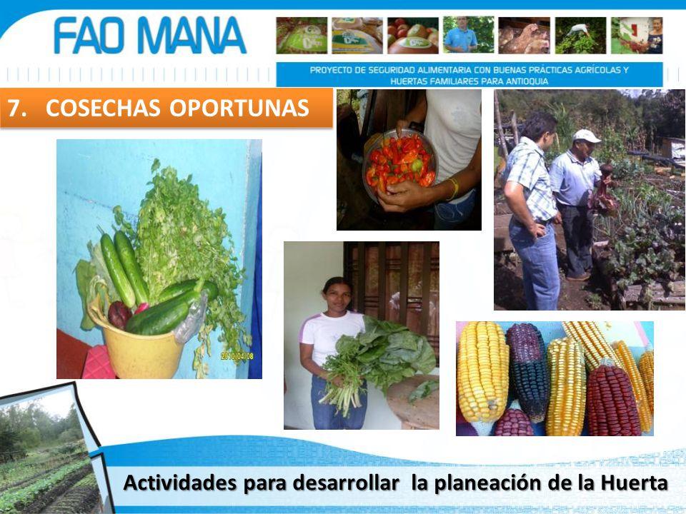 7. COSECHAS OPORTUNAS Actividades para desarrollar la planeación de la Huerta