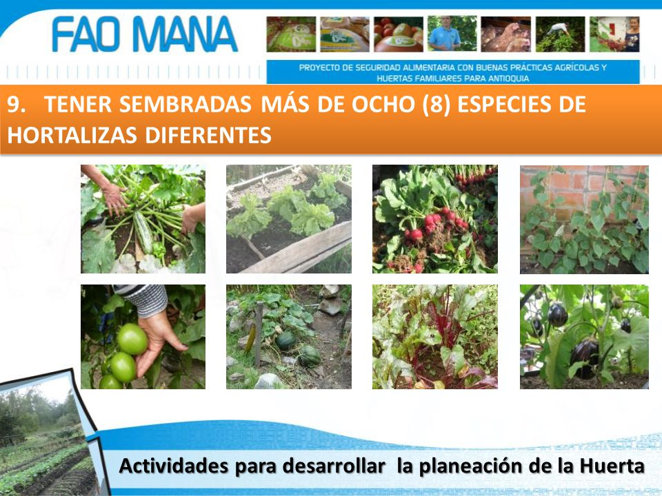 9. TENER SEMBRADAS MÁS DE OCHO (8) ESPECIES DE HORTALIZAS DIFERENTES