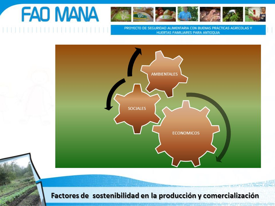 Factores de sostenibilidad en la producción y comercialización