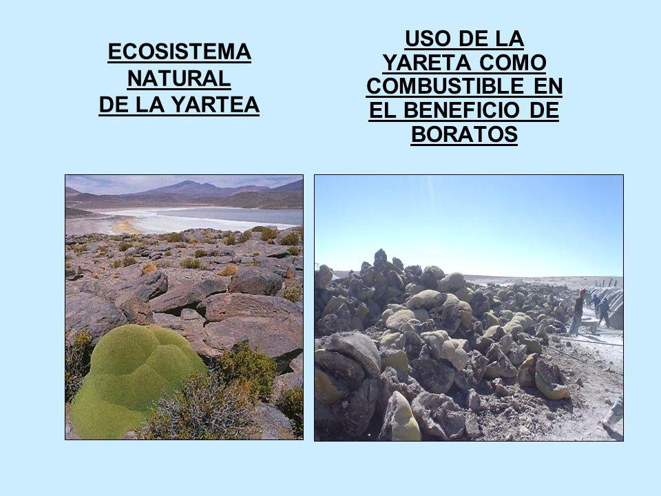 ECOSISTEMA NATURAL DE LA YARTEA