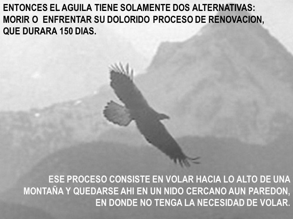 ENTONCES EL AGUILA TIENE SOLAMENTE DOS ALTERNATIVAS: MORIR O ENFRENTAR SU DOLORIDO PROCESO DE RENOVACION, QUE DURARA 150 DIAS.