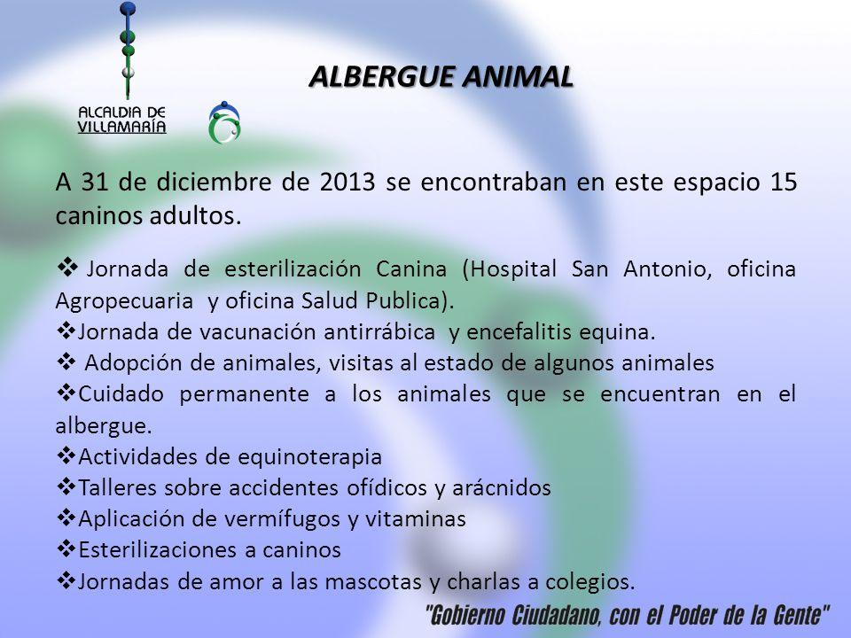 ALBERGUE ANIMAL A 31 de diciembre de 2013 se encontraban en este espacio 15 caninos adultos.