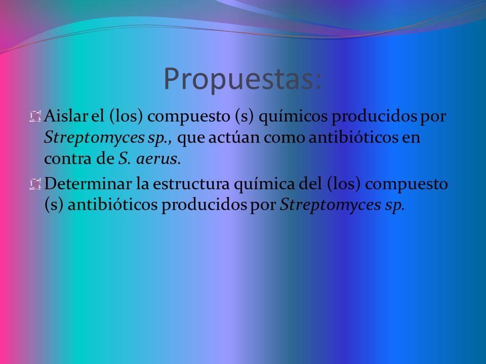 Propuestas: Aislar el (los) compuesto (s) químicos producidos por Streptomyces sp., que actúan como antibióticos en contra de S. aerus.