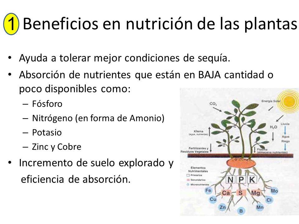 Beneficios en nutrición de las plantas