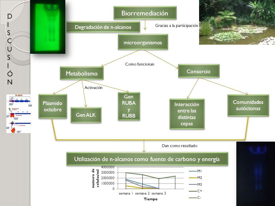 Biorremediación D I S C U Ó N Metabolismo