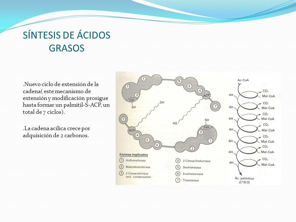 SÍNTESIS DE ÁCIDOS GRASOS